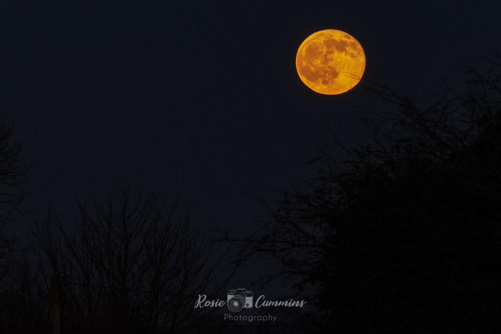 Christmas new moon