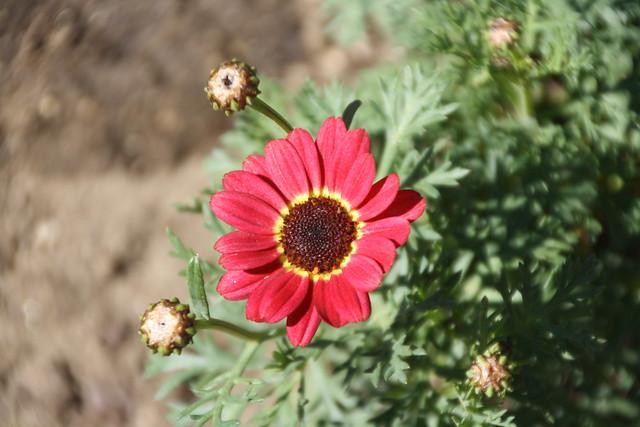 Flors, flowers