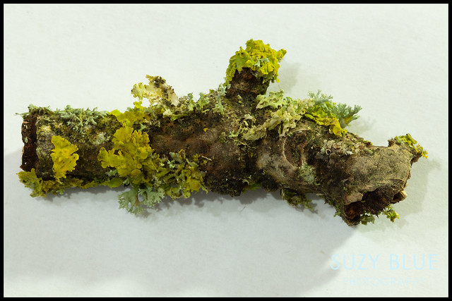 A whole world in a twig
