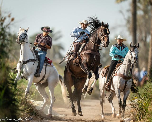 Cowboy at Barbar Farm - The Three Musketeers