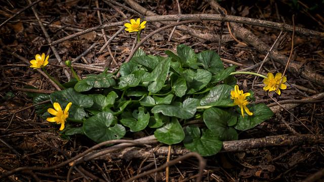 Riparian winter yellow (02)