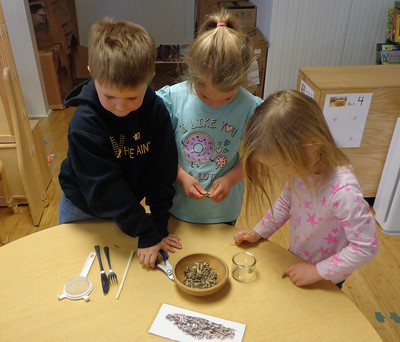 Which tool will open sunflower seeds?