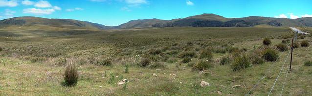 Meadow panorama, western Tasmania