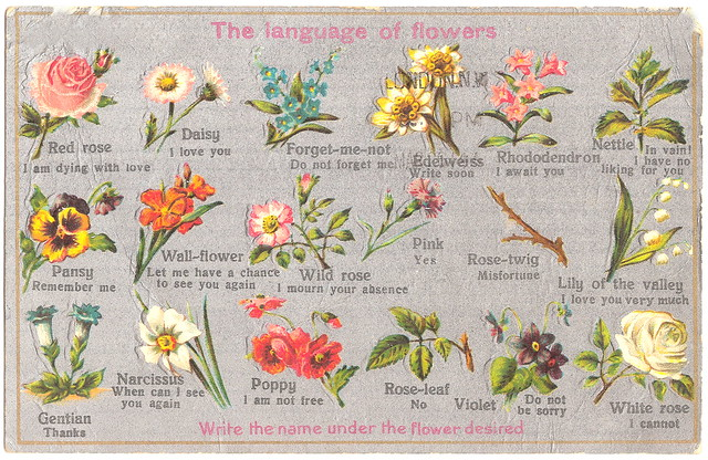 The Language of Flowers. And Pancho Villa.