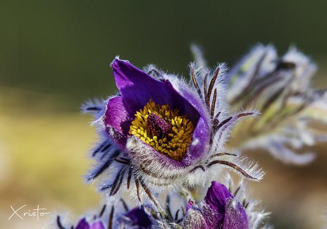 Susunka Wild Flower Sprink Nature Landscape