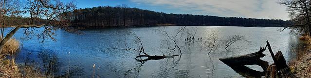 Cormorants at the lake