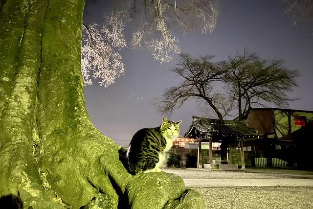 Today's Cat@2021−03−14