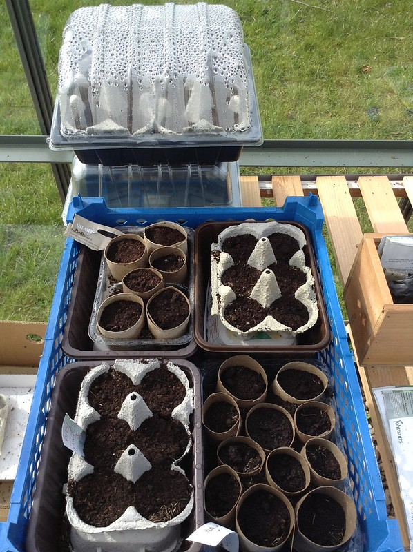 Planted Some Seeds and Sorted Things Out In The Greenhouse Yesterday
