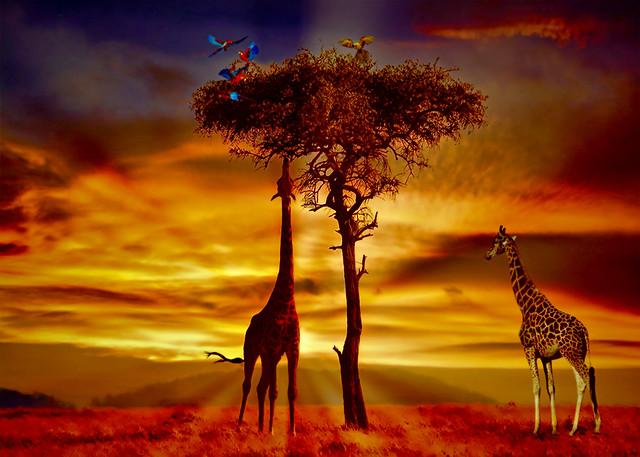 African Sunrise Fantasy