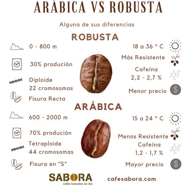 Arábica los mejores cafés del mundo.