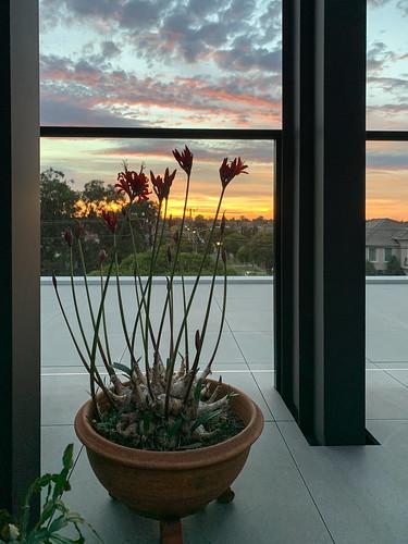 flower pot balcony clouds street composition melbourne sunrise australia