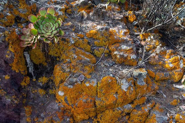 Lichen and Verode / Liquen y Verode