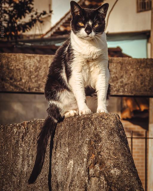 Pucca, a gata preguiçosa
