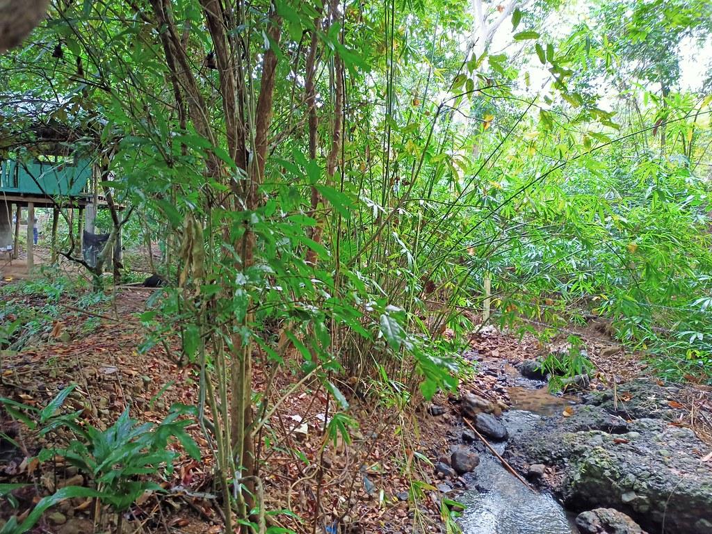 Capayas Creek Kingfisher Preserve