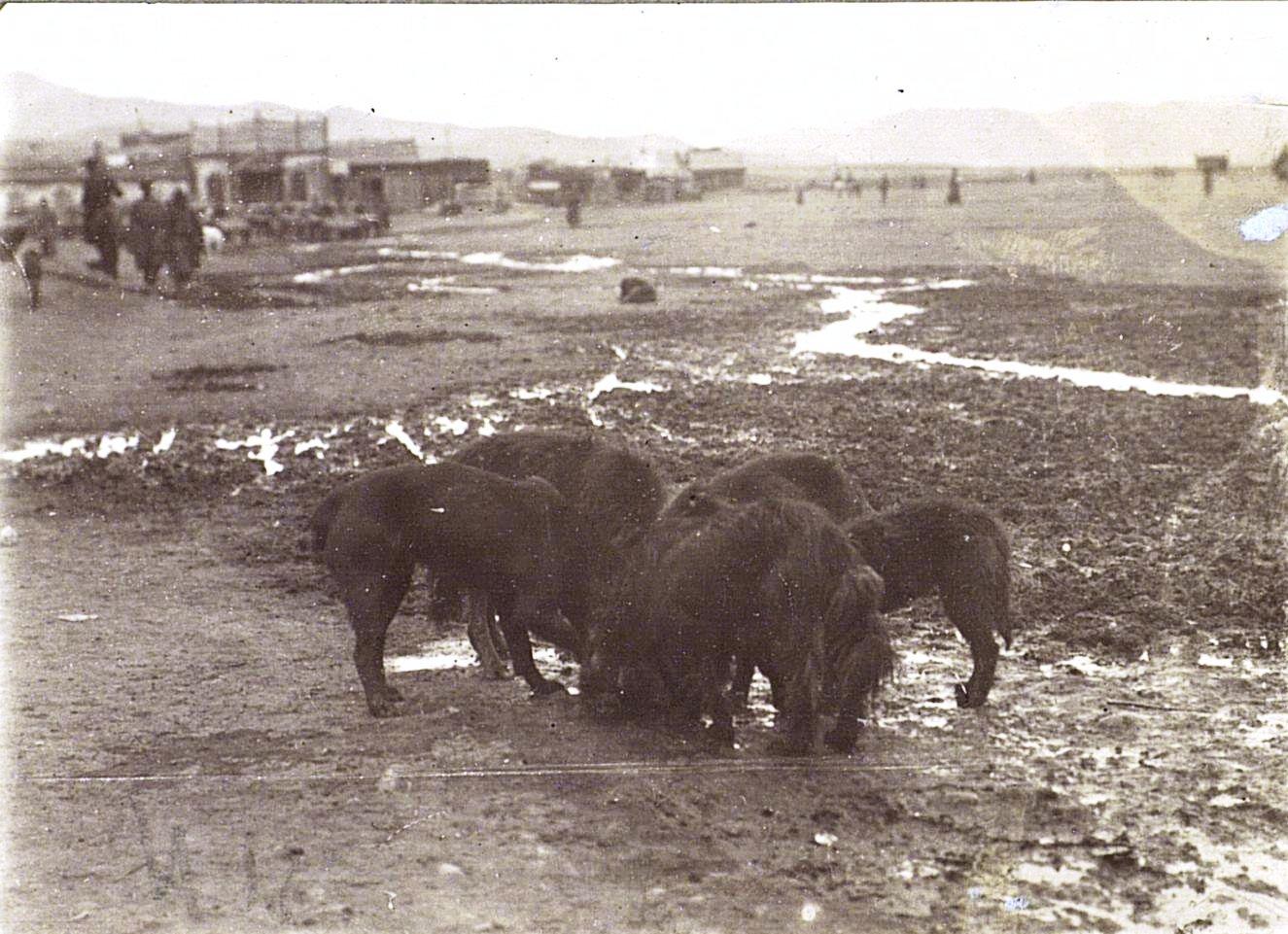 Завтрак Ургинских собак