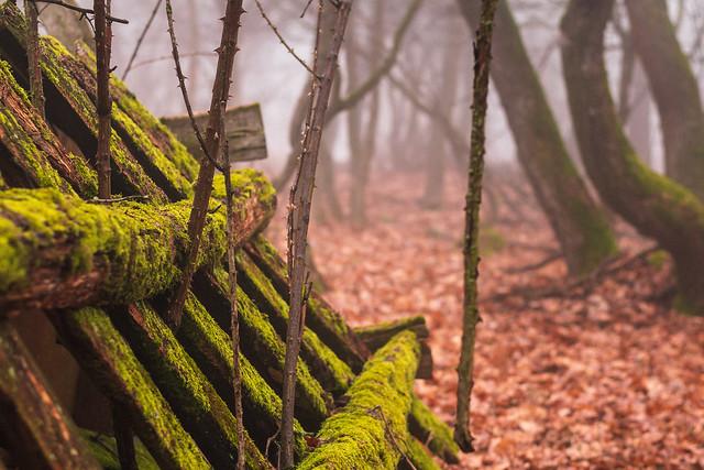 Foggy wood #5