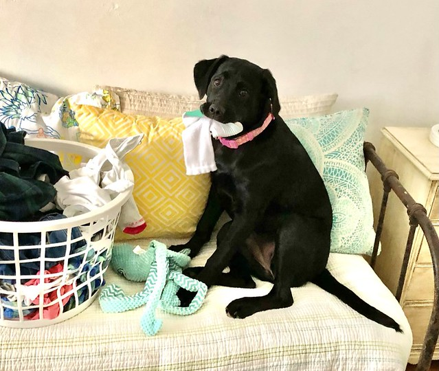 help with the laundry