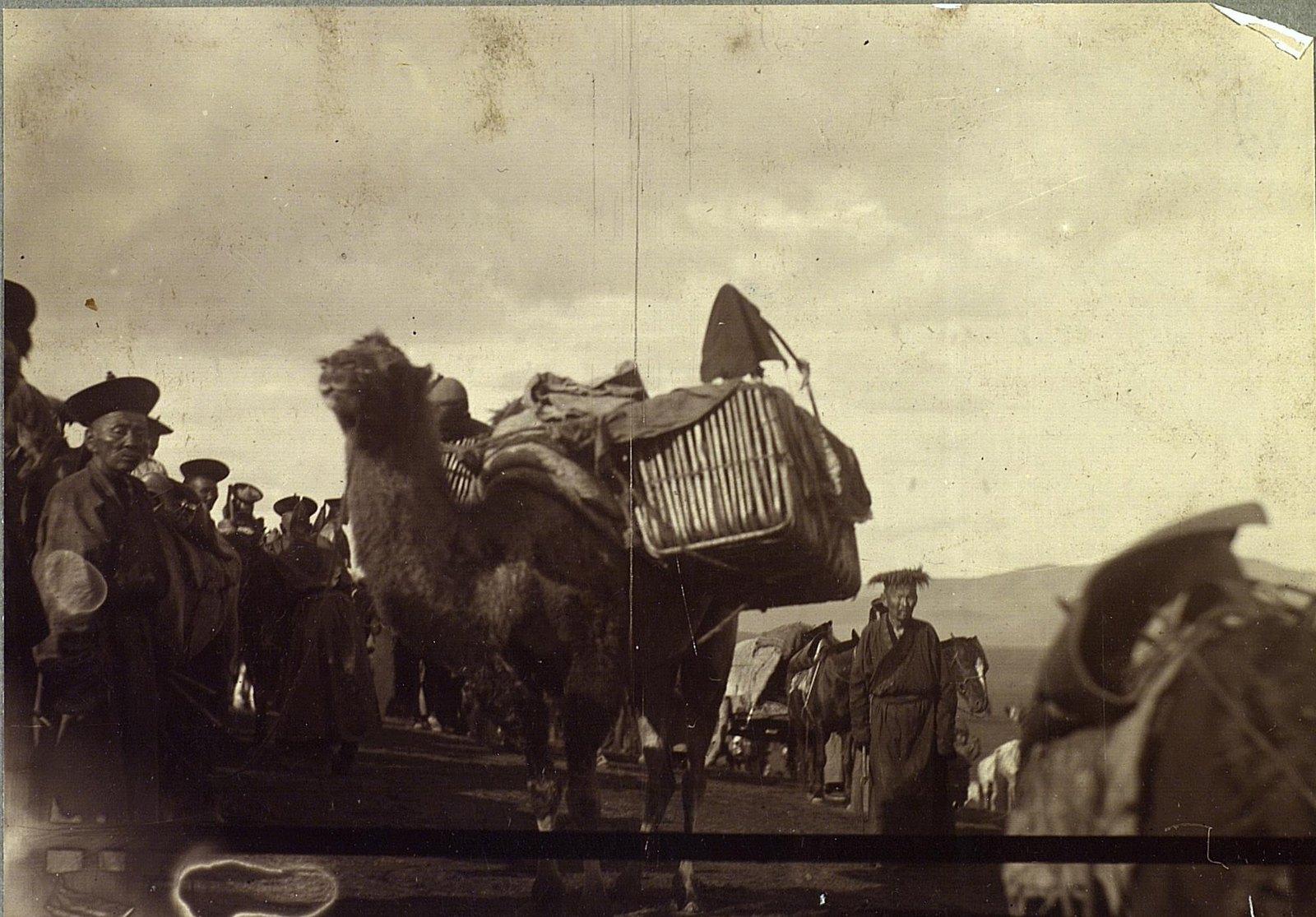 Ребята в корзинах на верблюде