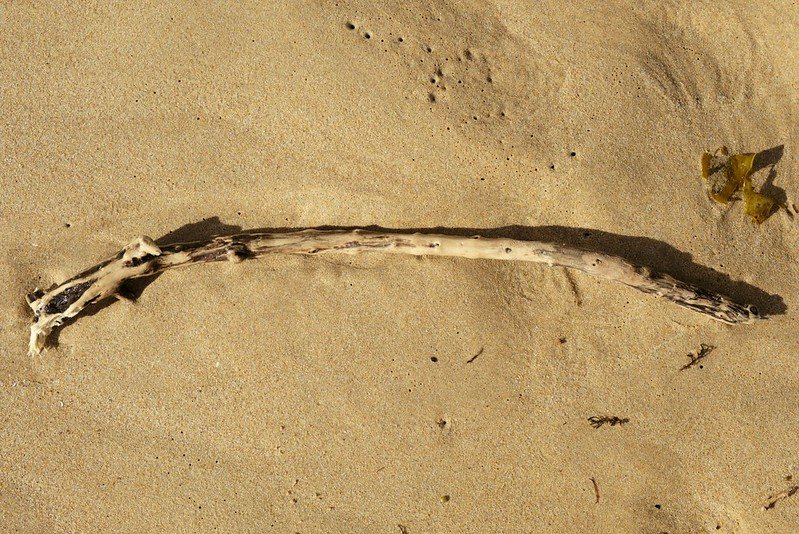 Driftwood, Warrain Beach