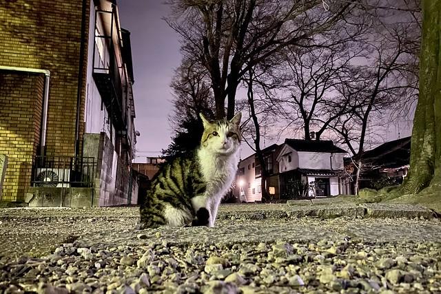 Today's Cat@2021−03−15