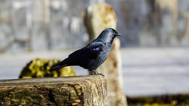 9514 - Bird