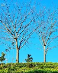 Forest Resorts in Sri Lanka