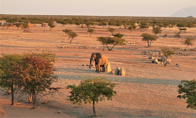 A great itch in Damaraland, Namibia