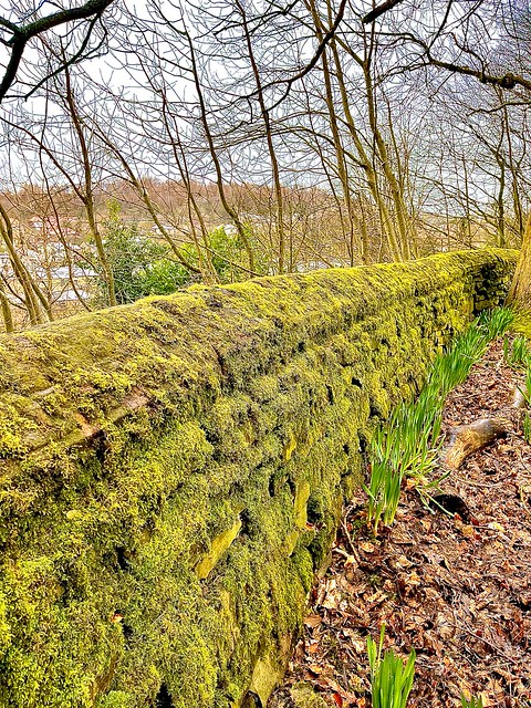 Living furry wall