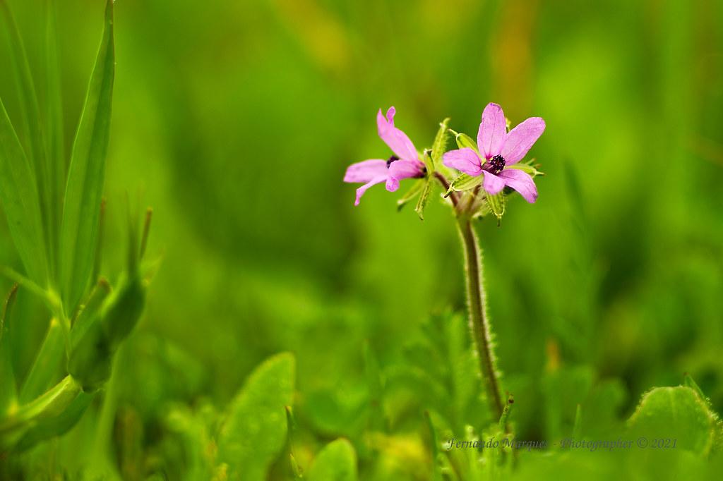 Wild flora...
