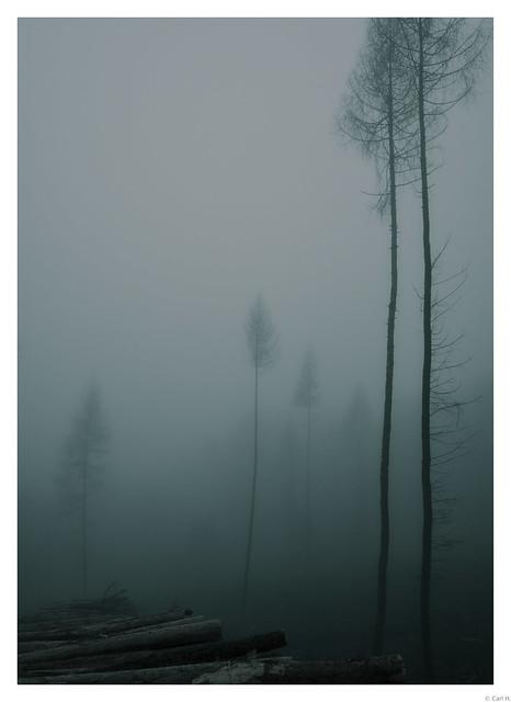 Moody fog.