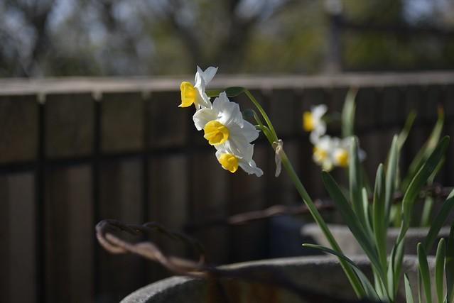 Spring Time 5_2 世界最小構成ズーム!w その2