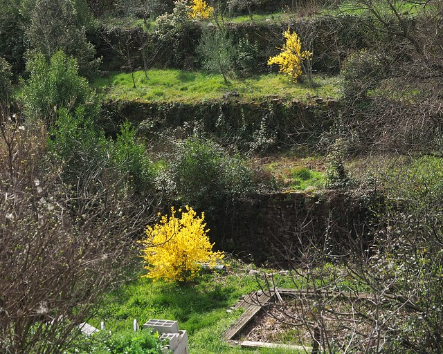 Restanques de printemps