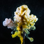 Colored milk drop in water