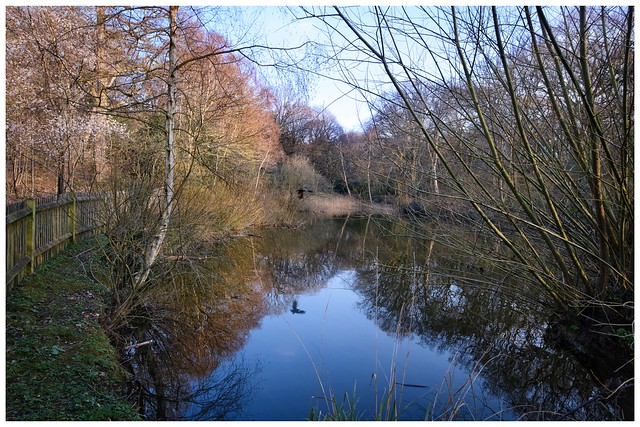Reflections in West Heath Pool …