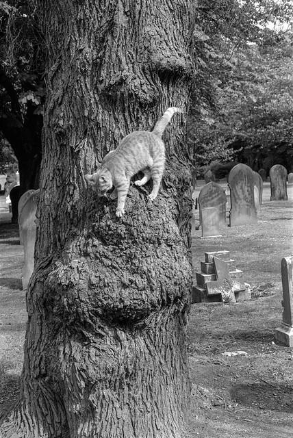 Hull General Cemetery, Spring Bank, Hull, 1989 89-8d-41