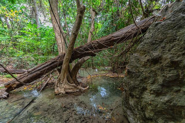 a stream in the jungle