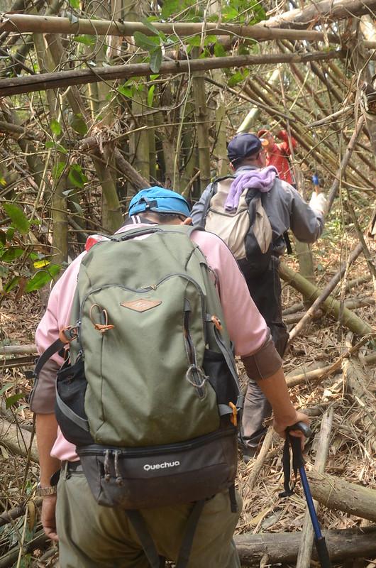 笨潭山山徑稜線路段 (7)