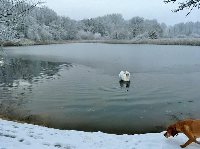 Germany, Begegnung am winterlichen See, Cody nimmt Witterung auf,  60081/13471