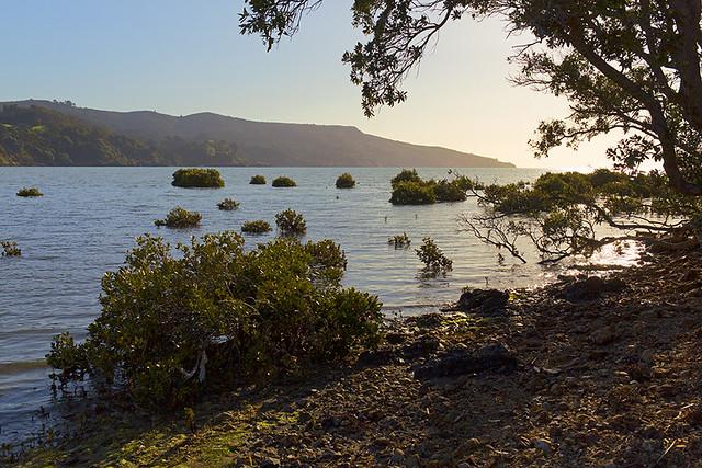Nouvelle-Zélande, la péninsule de Coromandel... / New Zealand, Coromandel peninsula