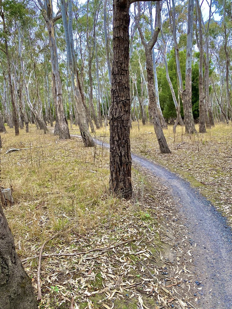 Lysterfield MTB Trails - curvy clay with shingle base at the start but much of the trail is very very rooty. In both climbs & descents