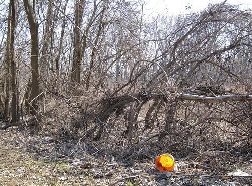 hartford easthartford ct hockanum eimer bucket orange baum bäume trees gestrüpp wilderness äste branches dickicht dropped müll garbage trash minimal minimalism minimalismus minimalistisch abstrakt abstract landschaft landscape