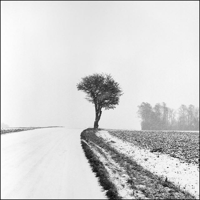 Country Road - Kodak Tri-x 400 exp*