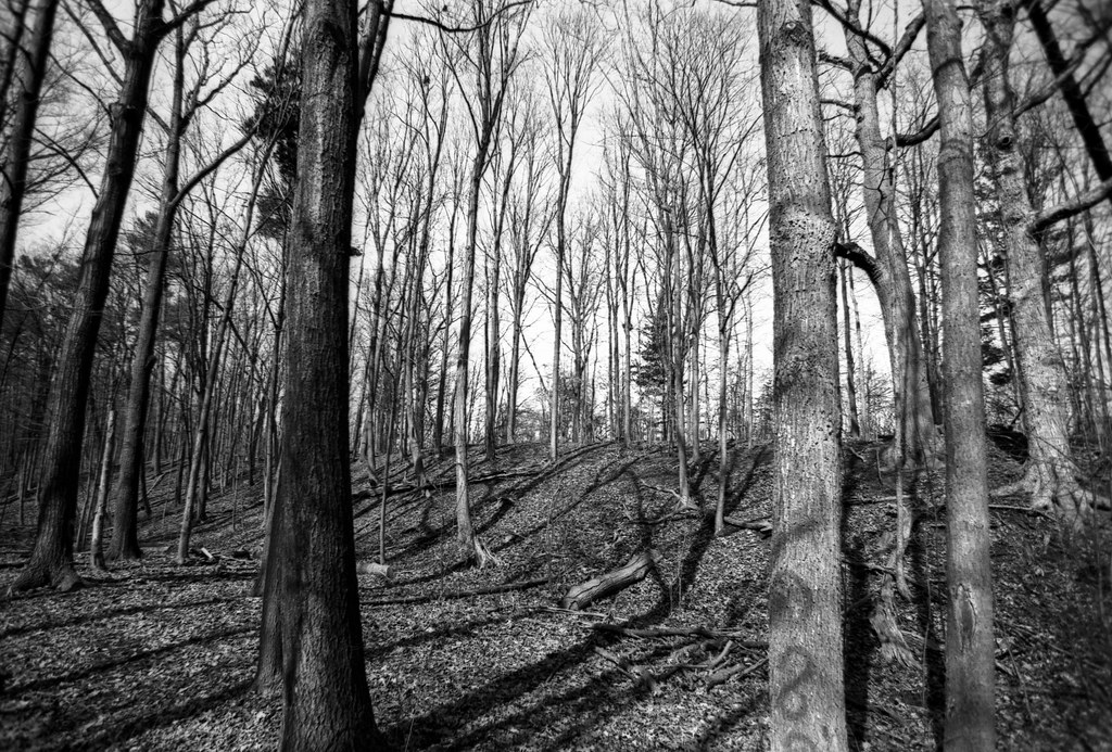 FRB No. 71 - Lomography Fantôme 8 - Roll 03 (Adox Rodinal)