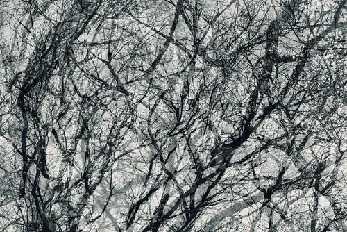 monochrome tree branch trunk multiexposure multipleexposure tripleexposure pni3xp helsinki helsingfors finland suomi pni pekkanikrus skrubu