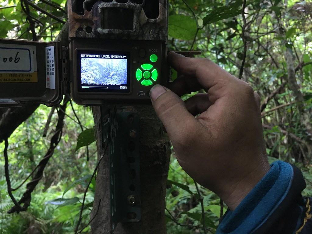 林務局狩獵自主管理計劃在各地陸續展開,部落傳統知識結合現代科學回報與監測,攜手創造山林永續管理機制。本報資料照,鄭雅云攝。