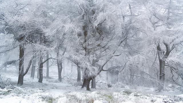 Snowy Woodland 9