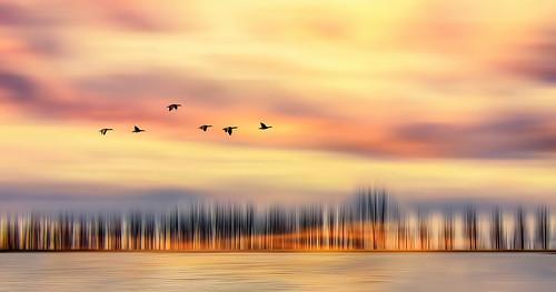 trees silhouette sky colorful sunset light effect surreal surrealism horizon birds flight flying waves reflection glowing flowing flowingandglowing glowingandflowing