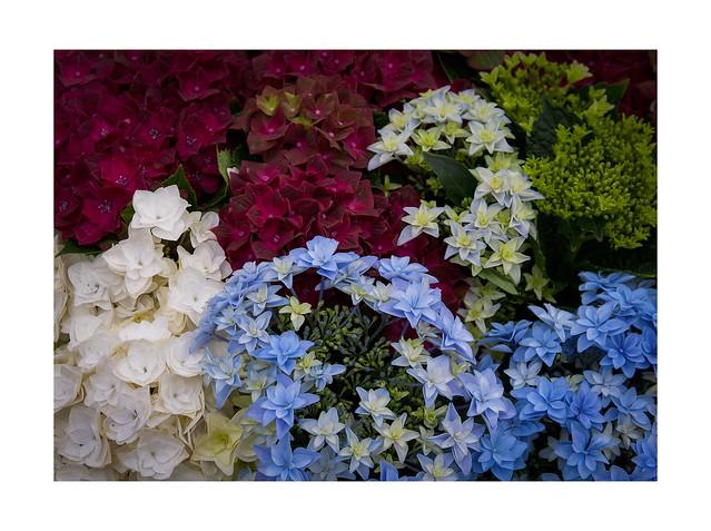 Umore floreale 6