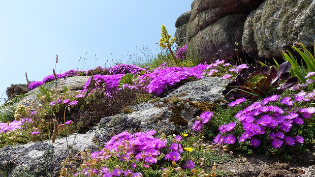 002  Minack Theater Rock Gardens Two