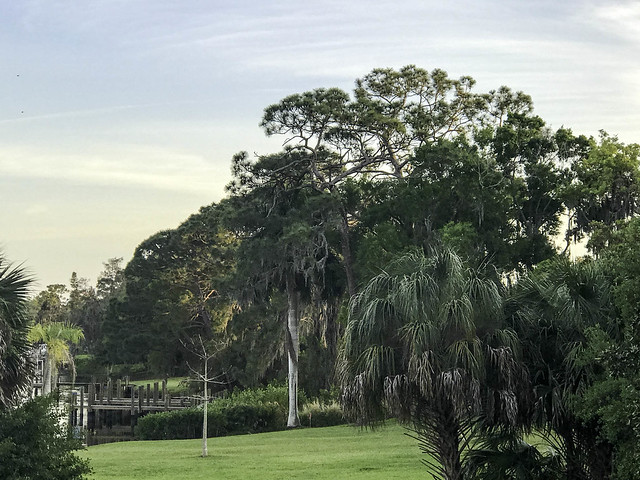 Trees in Florida in March